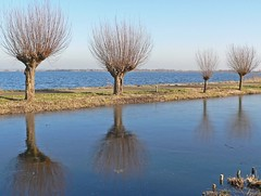 4 willows (Photos Ali) Tags: blue winter lake holland reflection tree nature water netherlands four natuur boom willow wilg zuidholland reeuwijk treesubject