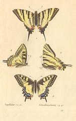 papillons d 13