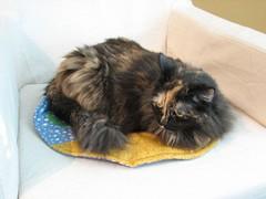 Fishbowl cat quilt31