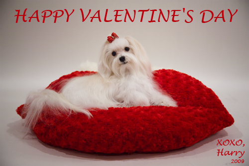 Happy Valentines day heart dog