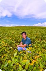 Shigow Poser! (Shigow) Tags: sky brasil nikon mine bean paisagem céu victor tokina sp crop soy soja d300 plantação lavoura 1116 shigueru ituverava shigow