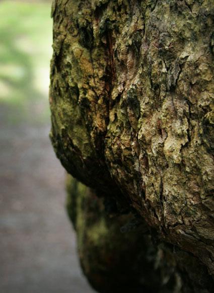 green:4 trunk