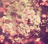 Vintage Spring (mjmatt) Tags: spring ppt dallasarboretum 85mm18 betharmsheimertexture