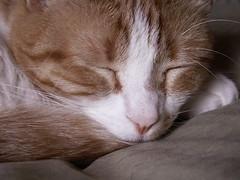 Byron Asleep