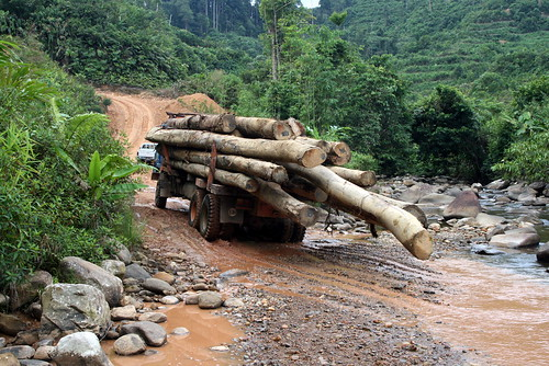 Logging in Borneo