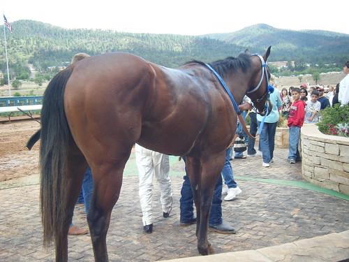 Horse #6 @ Ruidoso NM