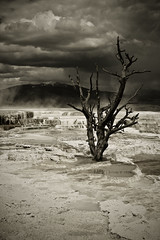 Mammoth Hot Springs (B.A.O.N) Tags: usa unitedstates yellowstonenationalpark northamerica digitalcamera wyoming dslr mammothhotsprings canonef28135mmf3556isusm canoneos40d