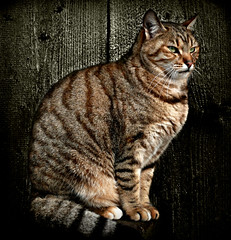 443Cat on Black by I Am Not I, on Flickr