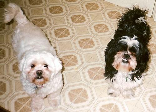 Lacey & Ernie