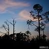 Big Lagoon at Dusk (a.d.miller) Tags: sunset sky tree silhouette clouds canon square florida branches pensacola biglagoon 28135mmis biglagoonstatepark 40d