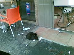 The shuarma's cat