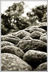 Jardin Albert Kahn #2 (neoweb001   www.julientordjman.fr) Tags: bw white black paris france tree canon rocks noir dof bokeh pierre jardin nb bp arbre blanc 2009 rocher pdc boulognebillancourt albertkahn 450d baladeparisienne julientordjman baladesparisiennes