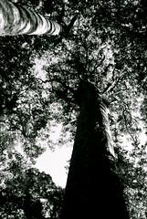 branch up