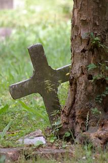 Cross hiding behind a tree...
