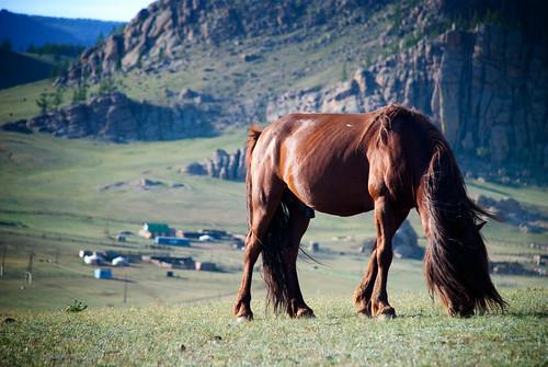 Gorkhi-Terelj National Park 08