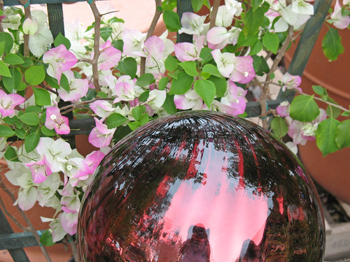 bougainvillea and gazing ball