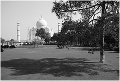 conifer shade, agra (nevil zaveri ( back but busy )) Tags: shadow blackandwhite bw india tree tower monument monochrome up garden photography blog photographer photos stock taj mahal tajmahal agra images mausoleum photographs photograph shade marble zaveri wonders stockimages pradesh travelogue uttar nevil shahjahan mughal uttarpradesh mumtaz minars nevilzaveri