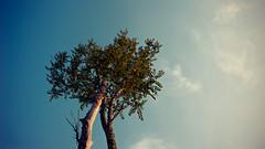 Manasquan Reservoir (Frank Scallo) Tags: sky tree prime nikon nj parks gradient allaire 35mmf2d d700