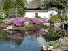 Chinese Garden - Rhododendrons in front of the Entrance Courtyard SC20110511 267 (fotoproze) Tags: canada primavera spring quebec montreal jar printemps tavasz frühling بهار vår jaro bahar wiosna 春 春天 gwanwyn forår voorjaar jardinbotaniquedemontreal весна kevät proljeće 2011 пролет אביב 봄 montrealbotanicalgardens ربيع vorið musimbunga earrach pomlad primăvară άνοιξη пролеће موسم udaberrian mùaxuân بہار musimsemi वसंत ฤดูใบไม้ผลิ