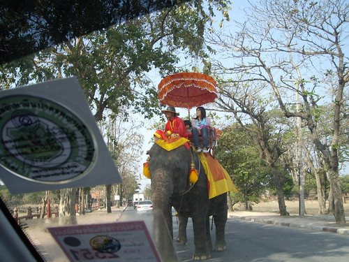 Giving way to an elephant in Ayutthaya