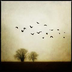 (anders mrtsell) Tags: trees birds chapeau magical dreamcatcher palabra 500x500 bsquare golddragon creativeimagery artlibre memoriesbook betterthangood littlestoriespicswithsoul artistictreasurechest lightiq