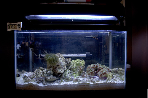 My 10 Gallon Saltwater Aquarium
