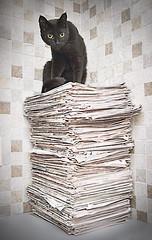 Yami (Jim Skea) Tags: newspapers gato yami jornal 2009 pretinho jornais