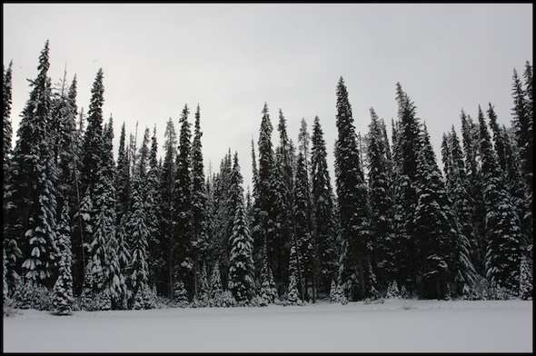 Lake, ice and trees - Manning Park