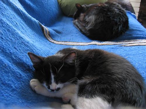 Bodhi & Jesse napping