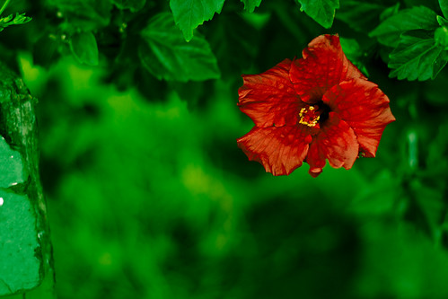 Red flower with a verdant background