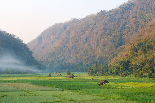 Fields near the Shan village of Thung Masaan, Mae Hong Son