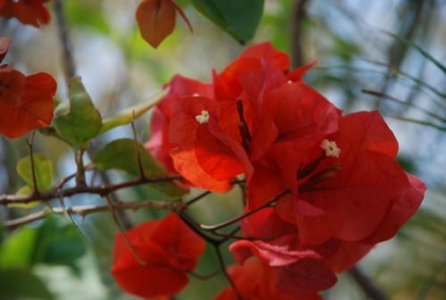 softer plants