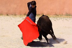 LCfoto_1633 (lcfoto) Tags: toros luc toro taureau tomasito stgilles taureaux tienta masdauziere chamontin