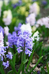 Flowers 2009-261