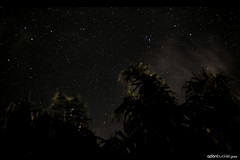 (Adon Buckley) Tags: sky night canon palm buckley adon 50d