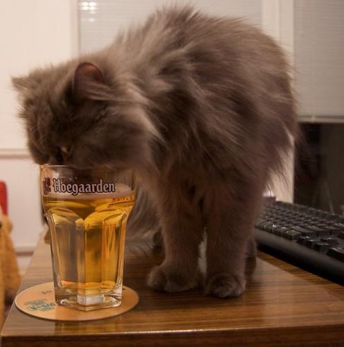 Even cats digg Hoegaarden