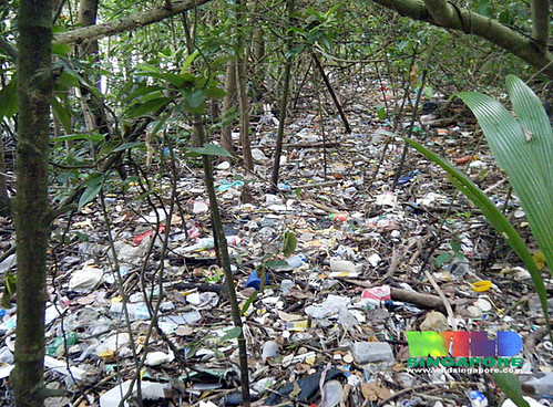 Litter in the mangroves of Pasir Ris