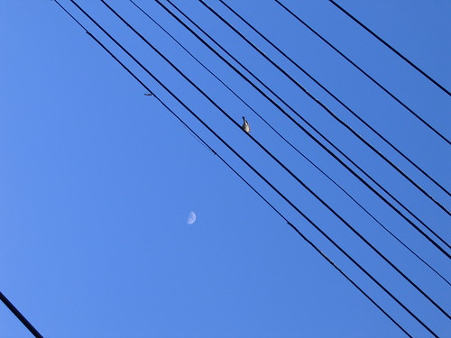 bird, wires, moon