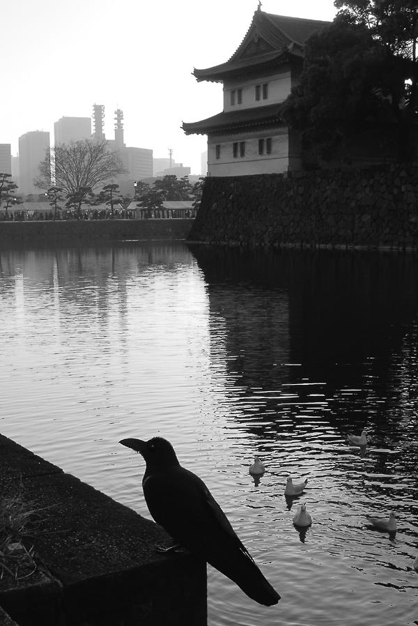 _raven_Tokyo_bw_