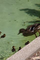 Louisville Zoo 088 (cellophane303) Tags: louisvillezoo