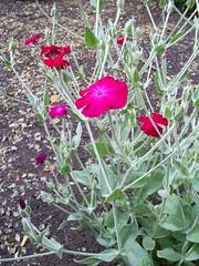 S5031472 (Ian Faz) Tags: flowers plants tress nessgardens