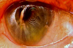 do you ever feel... (spysgrandson) Tags: camera macro eye closeup sony reflexions sonycybershot mtr flickraward onlythebestare awardtree altrafotografia spysgrandson atomicaward 051709
