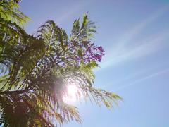 Quinta Flower! (Tiana  Ayres) Tags: flores purple flor lilac roxa quintaflower quintafeira lilas