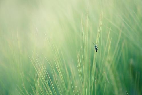 http://farm4.static.flickr.com/3409/3563945383_89897180cd.jpg