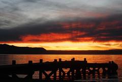 #184/365 - Lake Rotorua Sunset