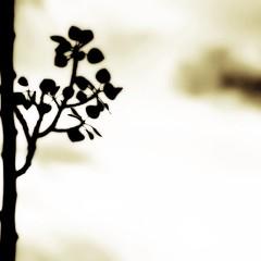 love's onus (provincijalka) Tags: tree green leaves rain clouds dark backyard poem branch gray windy monochromatic minimal part again blah coming aspen beforethestorm heavy fluttering eecummings darknes uninspired blanksky purged icarryyourheart project366 singlebranch provincijalka 311366 manyleaves lovesonus