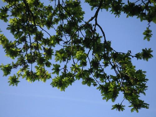 small-oak-michelmersh