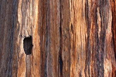 3bark-texture_source-of-Har.jpg
