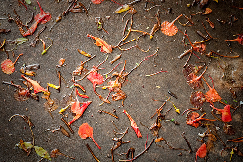 Dead leaves on the dirty ground