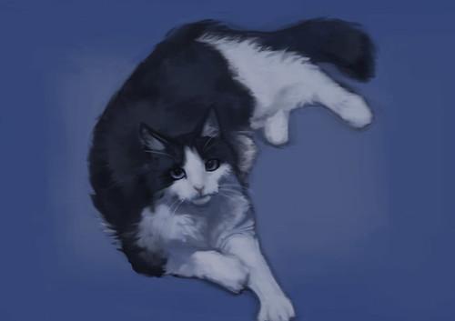 cat-pic3